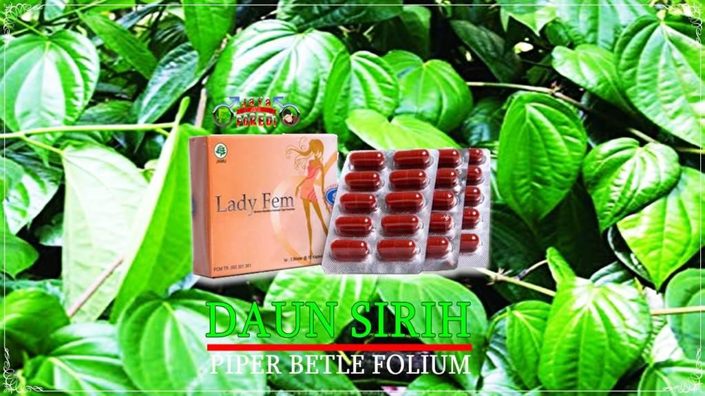 Obat telat datang bulan dari daun sirih
